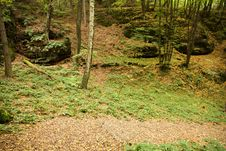 Free Autumn Forest Stock Photo - 36684910