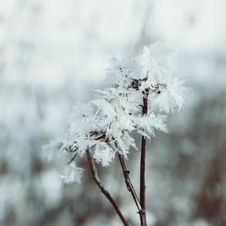 Free Winter Fairy Background Royalty Free Stock Photography - 36688887