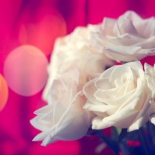 Free White Roses Stock Images - 36688904