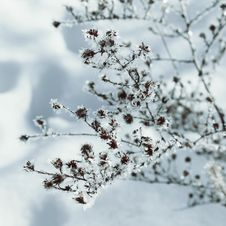 Free Winter Fairy Background Stock Photography - 36688922