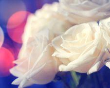 Free White Roses Royalty Free Stock Photo - 36688945