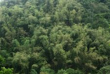 Free Bamboo Grove Royalty Free Stock Image - 36690526