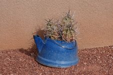 Free Cactus In A Blue Pot Royalty Free Stock Images - 36691289