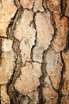 Free Tree Trunk Royalty Free Stock Photos - 36699868