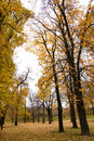Free Autumn Colors In Forest Royalty Free Stock Image - 3679286