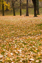 Free Autumn Colors In Forest Stock Photography - 3679362