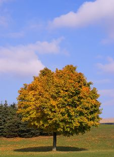 Free Tree On Autumn Season Stock Photos - 3672883