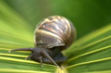 Free Snail On Leaf Royalty Free Stock Photography - 3673007