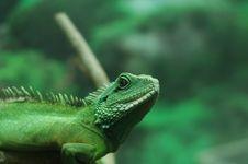 Free Lizard Stock Image - 3673301