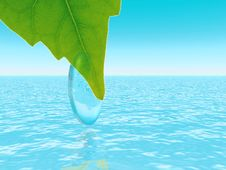 Free Water Drop On Brightly Green Leaf Stock Image - 3673471