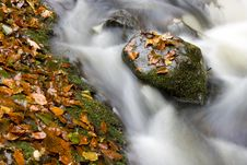 Hidden Brook In Autumn Stock Image