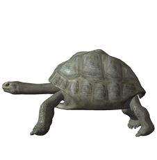 Free Tortoise Royalty Free Stock Image - 3673916