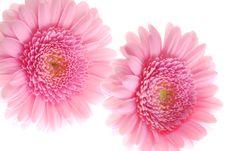Free Pink Stock Photo - 3674370