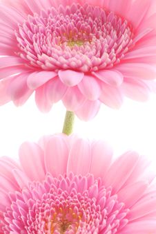 Free Pink Flowers Royalty Free Stock Photo - 3674375
