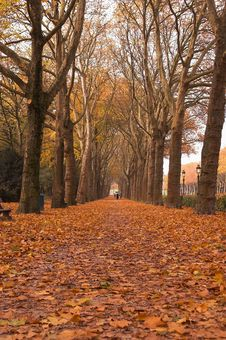 Free Park Alley In Autumn Stock Photo - 3674860