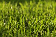Free Grass Stock Images - 3675364
