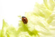 Free Ladybug Stock Images - 3675514