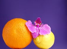 Free Orange, Lemon And Orchid Stock Images - 3675654