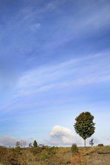 Free Single Tree Royalty Free Stock Photos - 3675698