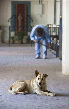 Free Church Dog Royalty Free Stock Photo - 3675725