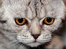 Free Angry Cat Stock Photos - 3676523