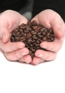 It Is A Lot Of Grains Of Coffee Royalty Free Stock Photography