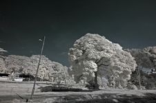 Free Infrared Photo – Tree, Skies And Cloud In The Pa Royalty Free Stock Photos - 3677558