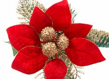 Free Poinsettia Royalty Free Stock Image - 3677566