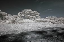 Infrared Photo – Tree And Railway Track Royalty Free Stock Image
