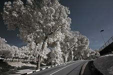 Free Infrared Photo – Tree, Highway And Cloud Royalty Free Stock Photo - 3677765