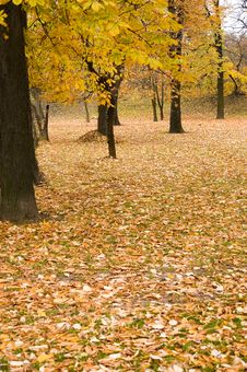 Free Autumn Colors In Forest Royalty Free Stock Photo - 3679015