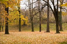 Free Autumn Colors In Forest Stock Images - 3679194