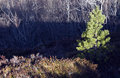 Free Abstract Shade On Mountain Stock Photos - 36700663