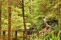 Free The Trail In The Forest Royalty Free Stock Photos - 36705808