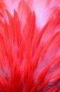 Free Flamingo Feather Close Up Stock Photos - 36706073