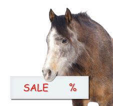 Free Horse With Sale Percent Sign On White Background Stock Photography - 36713262