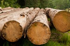 Free Row Of Felled Trees Stock Photography - 36716522