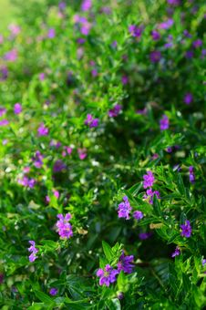 Free Little Purple Flower Stock Photo - 36785190