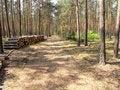 Free Autumn Log Trail Stock Photo - 3688500