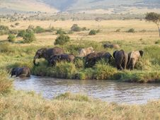 Free African Elephants Stock Photography - 3681452