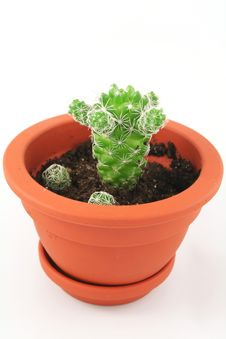 Free Cactus Pot Stock Photography - 3683112