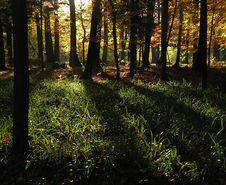 Free Autumn Light Royalty Free Stock Photos - 3683358