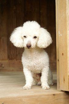 Free Puddle Dog Stock Photography - 3686672