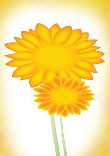 Free Sun Flower Royalty Free Stock Photos - 3687528