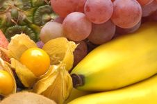 Free Exotic Fruits Royalty Free Stock Photography - 3688287