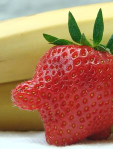 Free Red-nosed Strawberry Stock Photo - 3689620
