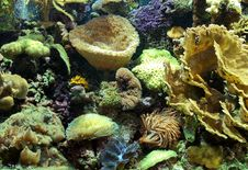 Free Alive Corals Royalty Free Stock Photo - 3689865