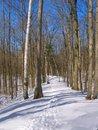 Free Winter Walk Stock Photography - 3697552