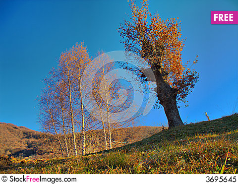Free Trees In Fall Season Royalty Free Stock Photo - 3695645
