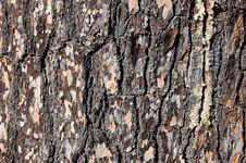 Free Pine Bark Stock Image - 3690501